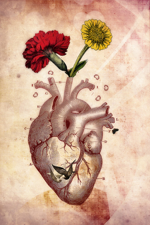 Anatomie 2, Photo Collage, Vintage, Anatomical Heart, Anatomy de ThePhotoImpression