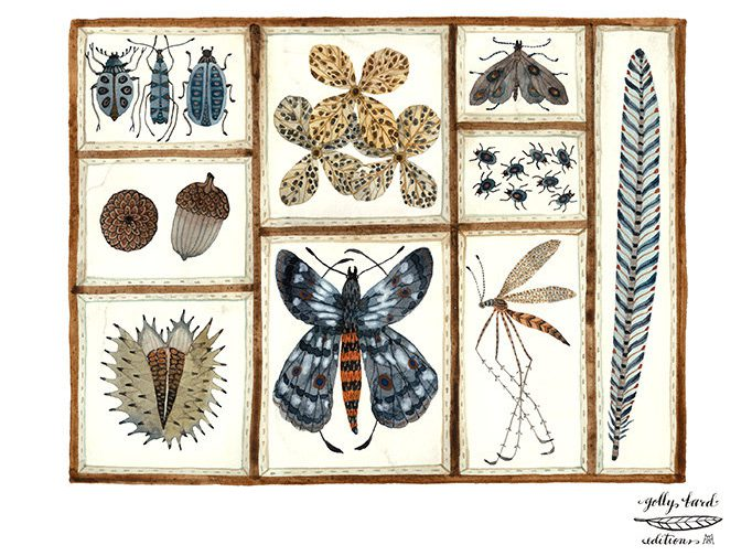 Nature Collection Print, butterflies, moths, insects, nature specimens art, giclee art print, watercolour print de GollyBard