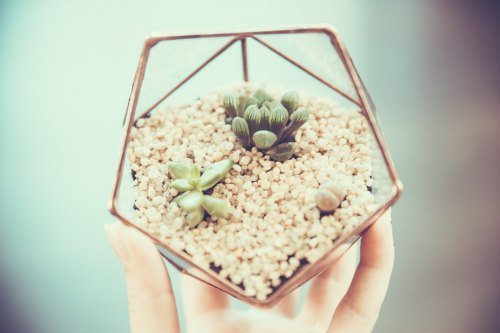 Mini Succulent Terrarium, Wedding box, Geometric Terrarium de Leosklo