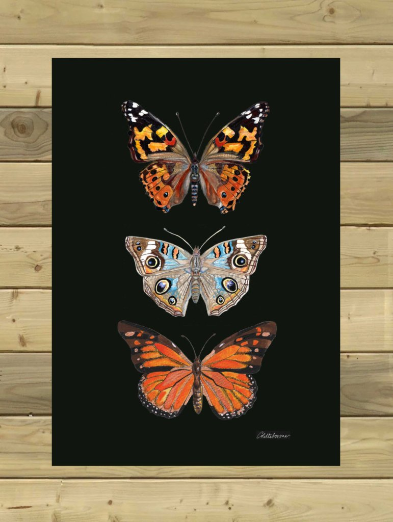 Butterfly Print Painted Lady Print Buckeye Print Monarch Print Dramatic Butterflies Print Original Butterfly Artwork Butterfly Painting de Canvasbutterfly