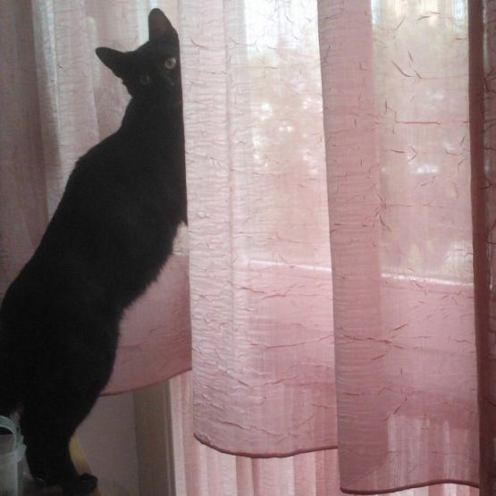 black-cat