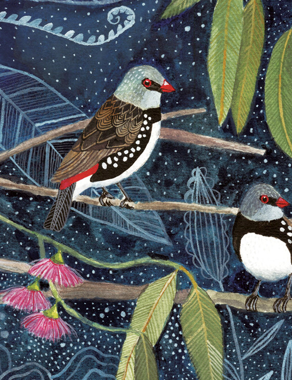 Diamond Firetail Finch Birds Art Print 8x10 by AmeliaHerbertson